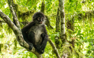 European Union, WCS and CCAD to Support Conserving the Five Great Forests of Mesoamerica