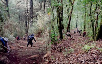 Comunidades de la Red Utz Che' en Guatemala enfrentan incendios forestales con prácticas ancestrales como el k'axk'ol