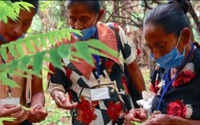 FOMUJER abre convocatoria para fortalecimiento de seguridad alimentaria y medicina tradicional
